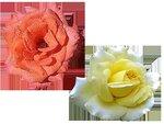 rose8.png