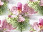 blooms7_1 (6).jpg