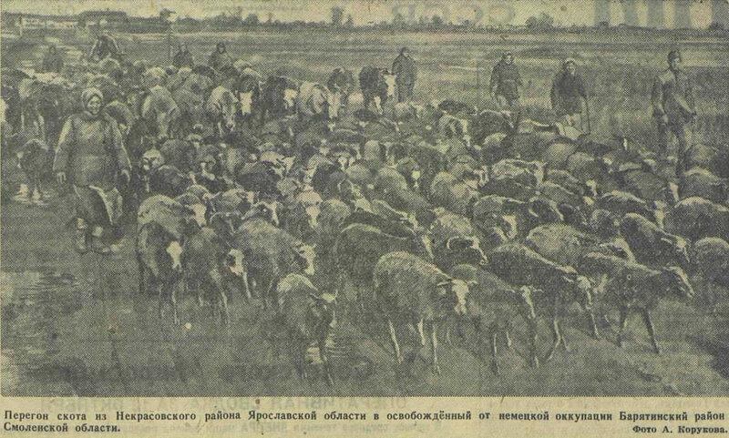 «Известия», 13 октября 1943 года, немецкая оккупация