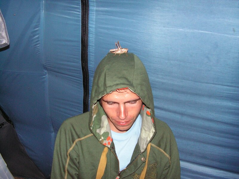 саранча на голове