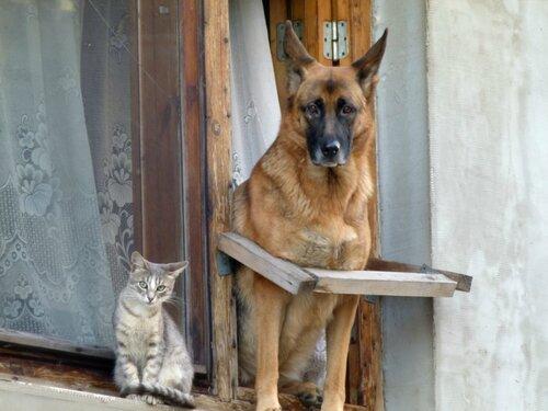Как кошка с собакой:))))
