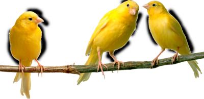 Ptice..... 0_963a6_c4a85db7_L