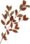 Lilas_It's time to love_add-on_elmt (7).png