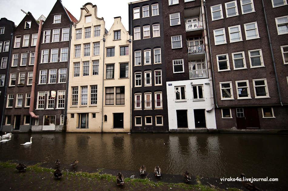 Секс шоу в амстердам