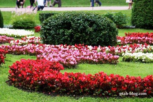 петродворец, петергоф, цветы