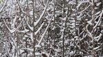 293.JPG Снег.