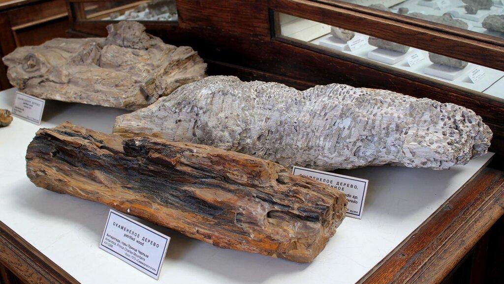 Окаменелая древесина