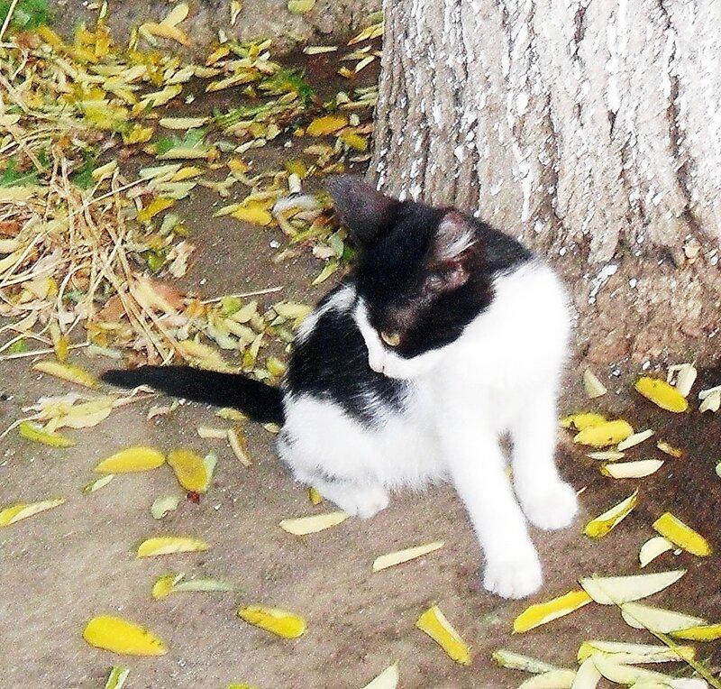 Листья жёлтые нам под ноги ложатся ... SAM_9944.jpg