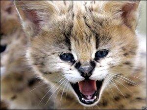 Кошка за 12 тысяч долларов поселилась во Владивостоке