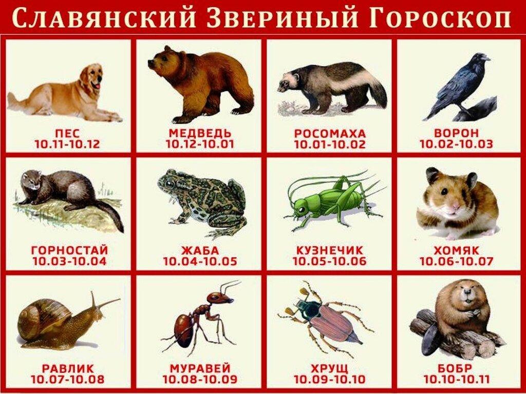 Славянский Звериный Гороскоп..jpg