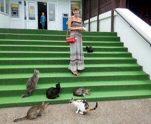 Кошачья мама