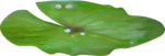 Tea party at the pond_KandiDesigns 25.png