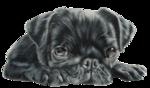 Собачки (71).jpg