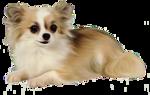 Собачки (175).jpg