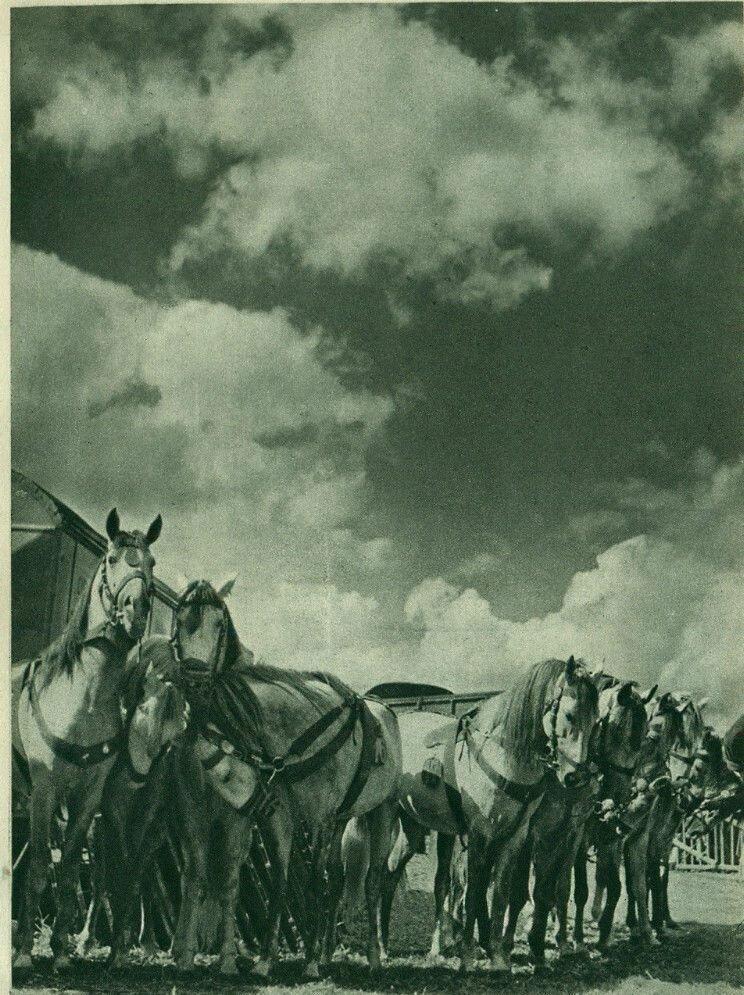 1939. Цирк. Цирковая кавалерия