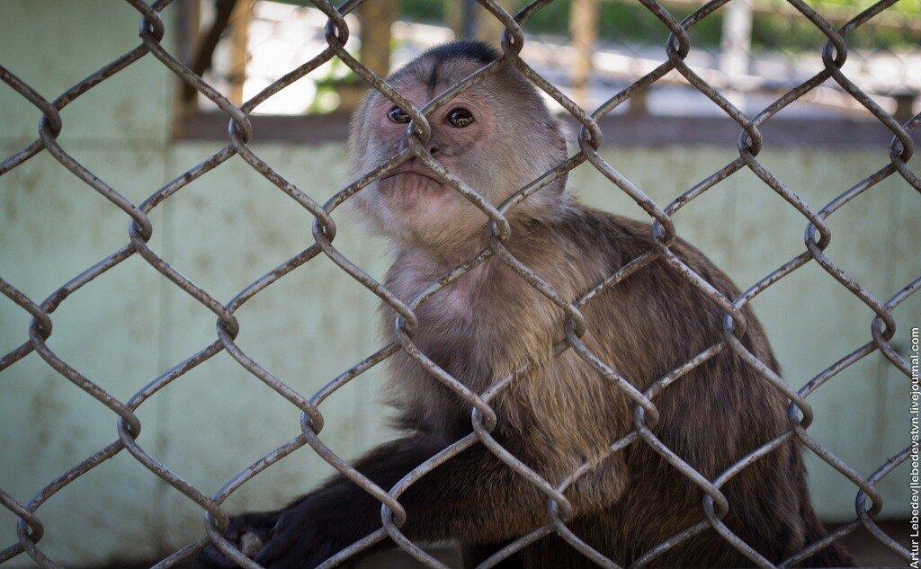 Смотреть фотографии обезьян любительское 25 фотография