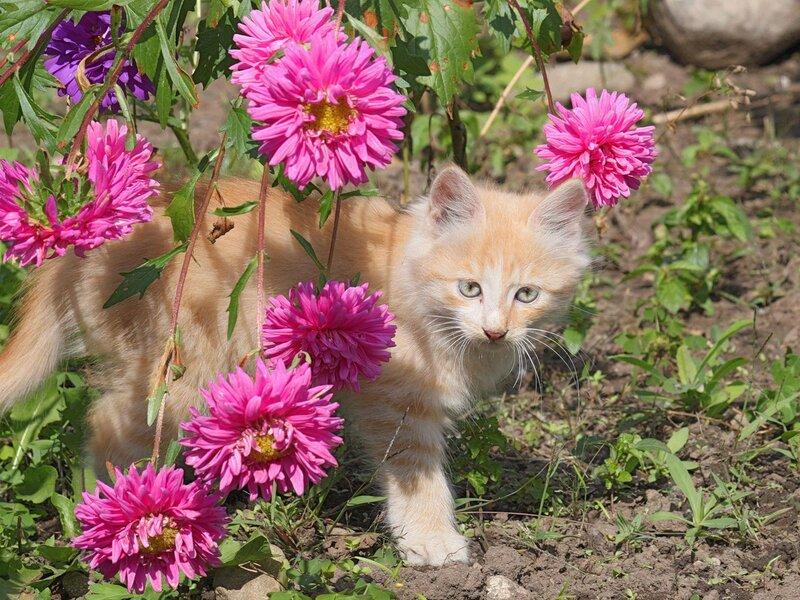 Котенок - цветок.