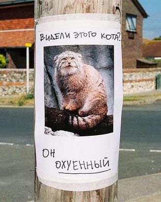 Кот Шредингера