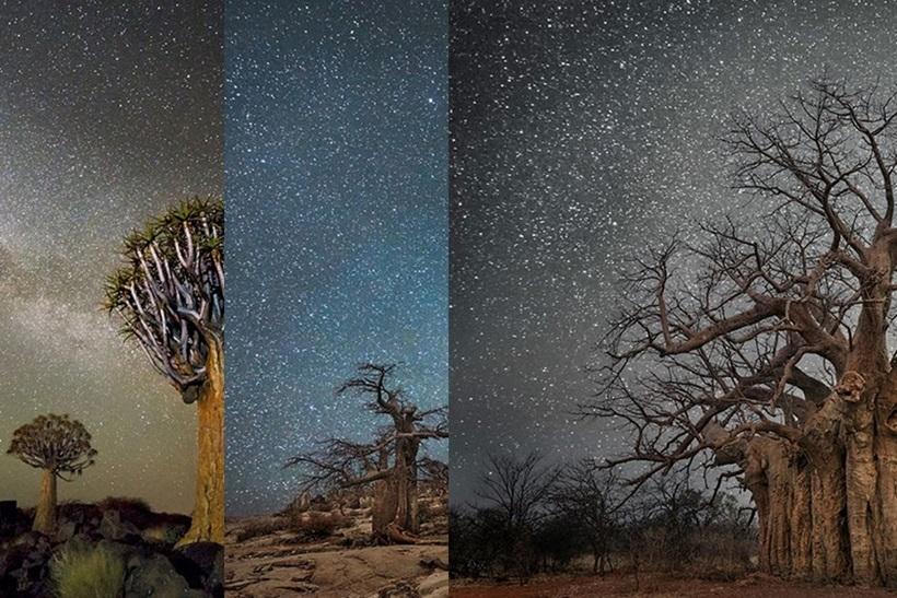 Фотограф Бет Мун: древние деревья Африки под звездным небом 0 136238 5637d35d orig