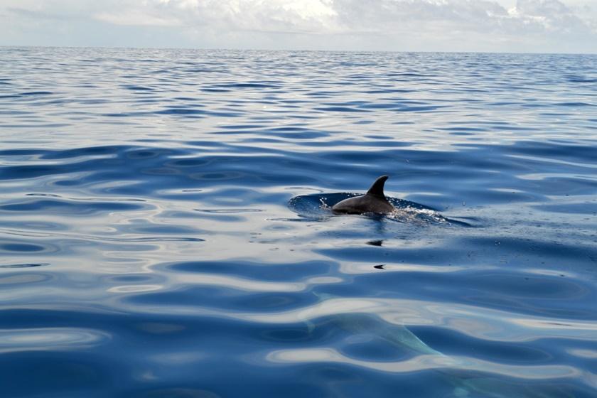 Дельфины у побережья Венесуэлы. Красивые фотографии 0 141a53 5d58bf64 orig