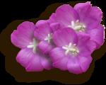 kimla_WTSE_flowers_sh.png