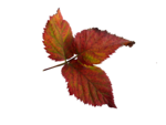 autumn_by_marzena el17.png