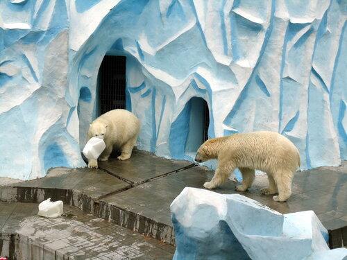 Новосибирский зоопарк. Белые медведи
