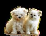 Собачки (60).jpg