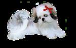 Собачки (150).jpg