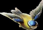 ldavi-paintersfaeries-flyingbird2.png