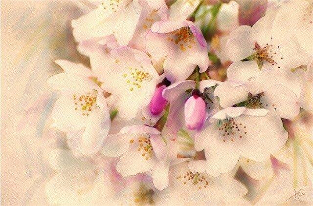 Цветы из акварели Alberto Guillen