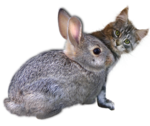 Rabbit 7.png