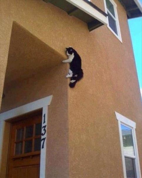 смешные картинки гибка кошка