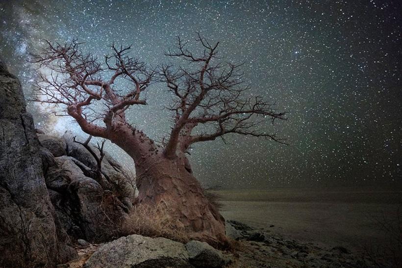 Фотограф Бет Мун: древние деревья Африки под звездным небом 0 136234 fbb610c9 orig