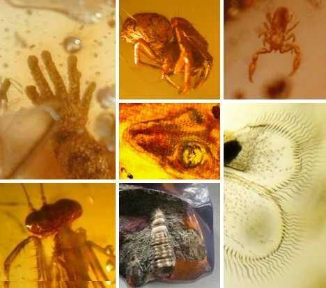 янтарь, насекомые в янтаре