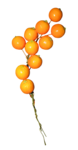 MCrea_SweetPeaches (10).png