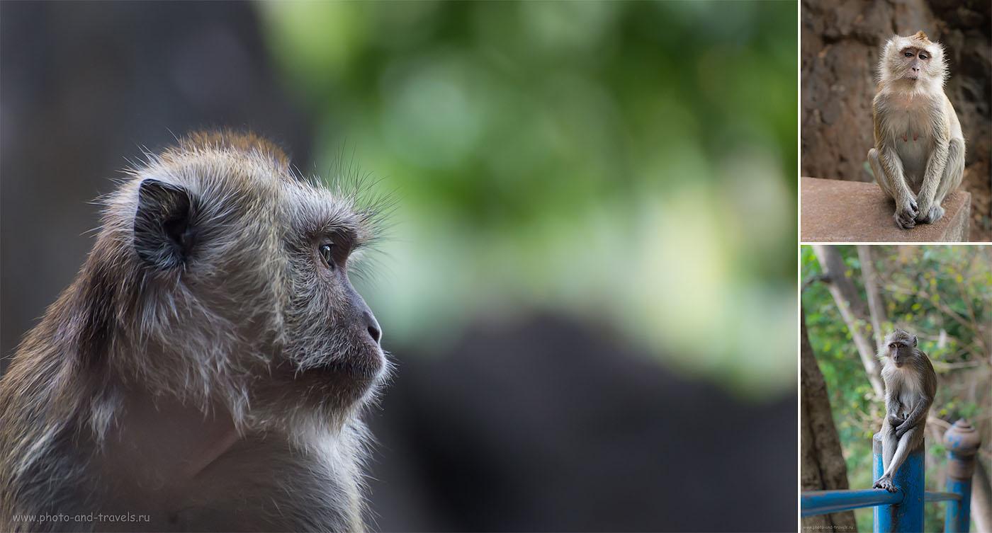 Фото 9. Отдых в Таиланде самостоятельно. Экскурсии в провинции Краби. Скромные обезьянки