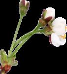 Весенний сад (13).jpg