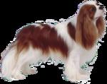 Собачки (95).jpg