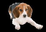 Собачки (157).jpg