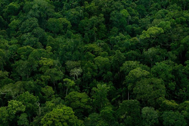 Фотопутешествие по лесам Амазонки