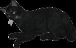 rs_blackcat1.png