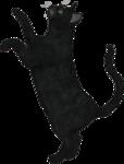 rs_blackcat2.png