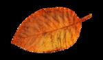 Солнечная осень (41)