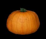 волшебная осень (114)
