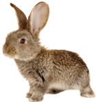 rabbit_6.png