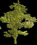 Secret Garden Tree4.png