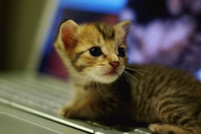 Забавные животные...:) http://img-fotki.yandex.ru/get/4415/130422193.31/0_684df_e60aa9bc_orig
