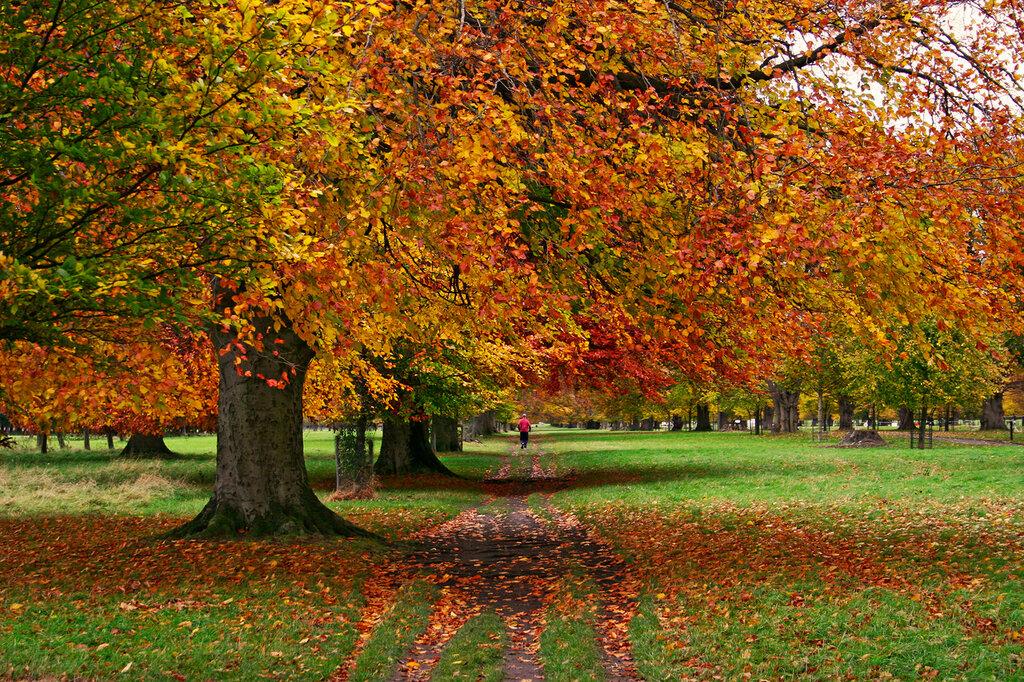 осень в финикс парке