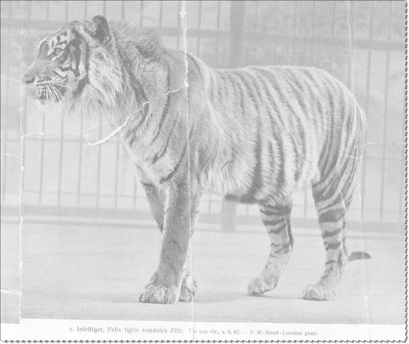 Чёрная книга вымерших животных фото 4